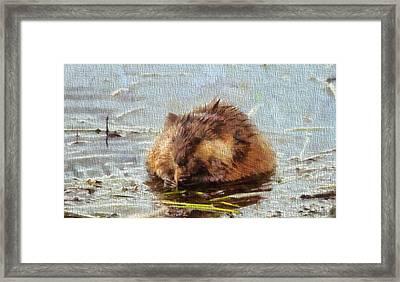 Beaver Portrait On Canvas Framed Print