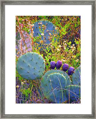Framed Print featuring the photograph Beavertail Cactus by Antonia Citrino