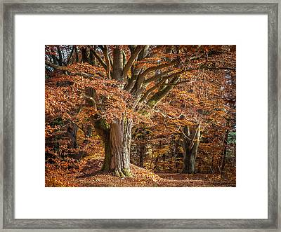 Bech Tree With Red Foliage Framed Print by Martin Liebermann