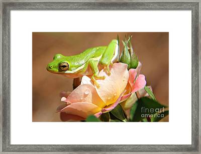 Bed Of Roses Framed Print by Leslie Kirk
