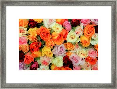 Bed Of Roses Framed Print by Tony Grider