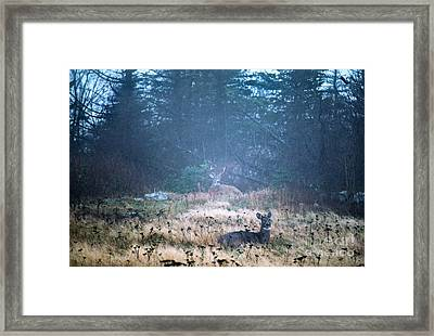 Bedded Down In Rain Framed Print