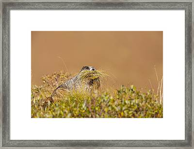 Bedding For The Winter Framed Print by Tim Grams
