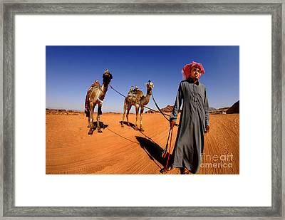 Bedouin And Camels Framed Print