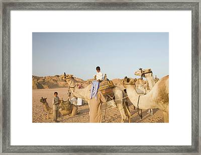 Bedouins And Their Camels Framed Print