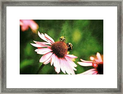 Bee 4 Framed Print by Simone Ochrym
