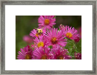 Bee Framed Print by Alana Ranney