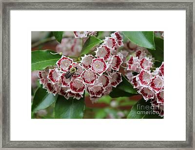 Bee Among Blossoms Framed Print