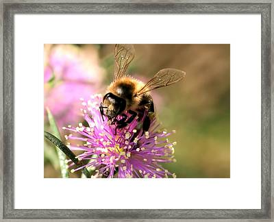 Bee And Blossom Framed Print