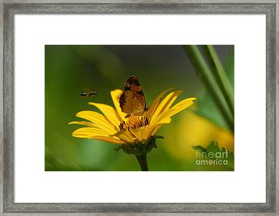 Bee And Butterfly Framed Print by Pamela Shane
