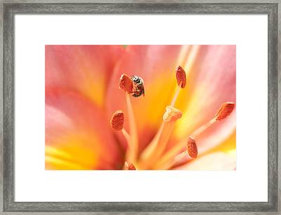 Bee And Lily Framed Print