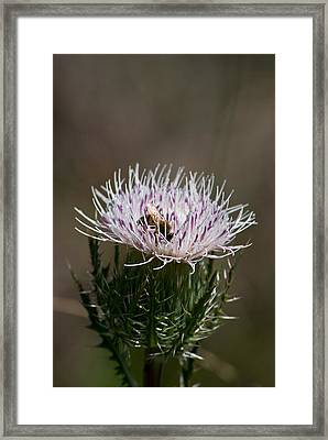 Bee And Pollination Pla 508 Framed Print