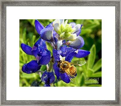 Bee And The Bonnet Framed Print