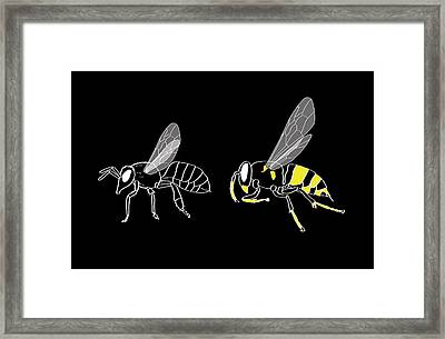 Bee And Wasp Anatomy Framed Print by Claus Lunau