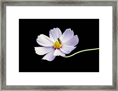 bee and Wildflower Framed Print
