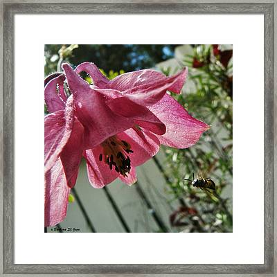 Bee Are You Looking At Me Framed Print