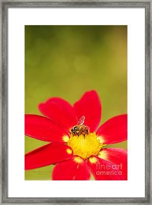 Bee-autiful Framed Print