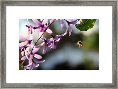 Bee Back Framed Print
