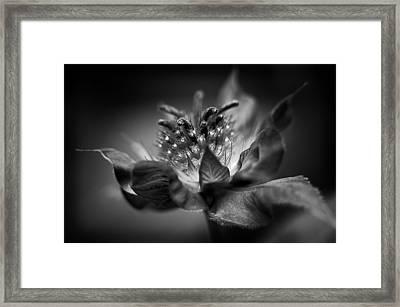 Bee Balm 10 Framed Print by Simone Ochrym