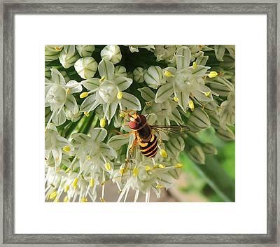 Bee Beautiful Framed Print