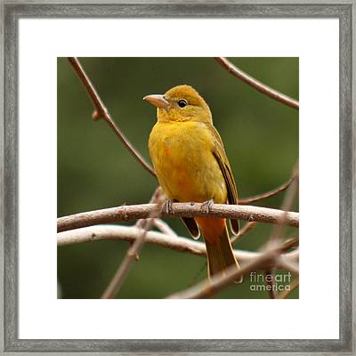 Framed Print featuring the photograph Bee Bird by Bob and Jan Shriner