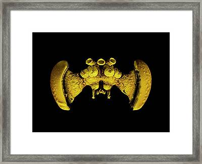 Bee Brain Framed Print by Dan Sykes/natural History Museum, London