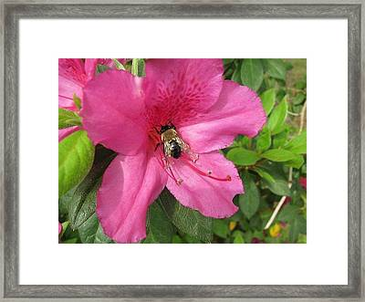 Bee Cause Framed Print