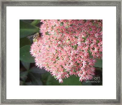 Bee Climbing Framed Print by Christina Verdgeline
