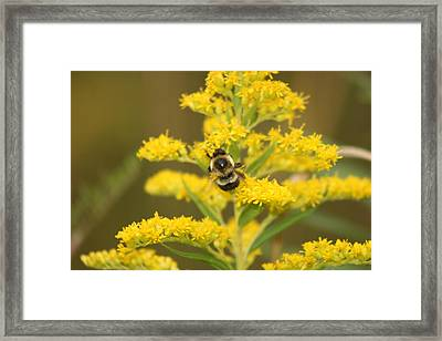 Framed Print featuring the photograph Bee Closeup by Paula Brown