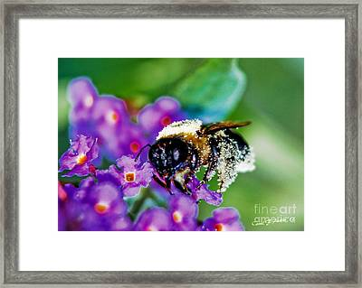 Super Bee Covered With Pollen Framed Print by Carol F Austin