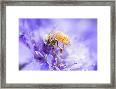 Bee Dream Framed Print by Caitlyn  Grasso