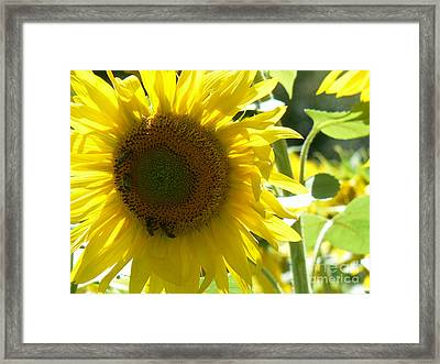 Bee Ecology Framed Print