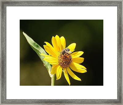 Framed Print featuring the photograph Bee Flower by John Johnson