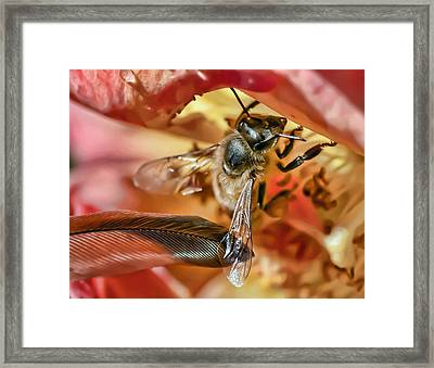 Bee Gentle Framed Print
