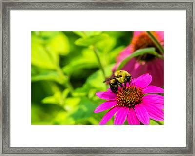 Bee Happy Framed Print by Jon Woodhams