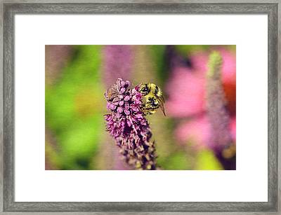 Bee Happy Framed Print by Maria Angelica Maira