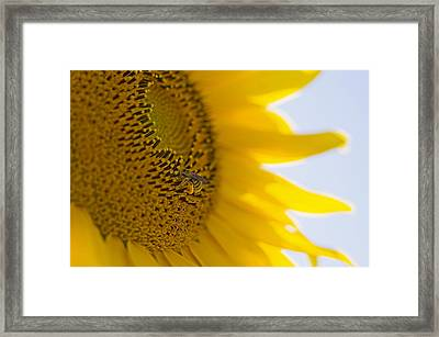 Bee Happy Framed Print by Nick  Boren