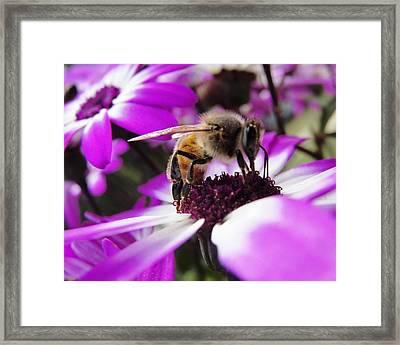 Bee Happy Framed Print by Norma Brock