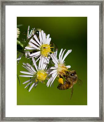 Bee Harvest Framed Print