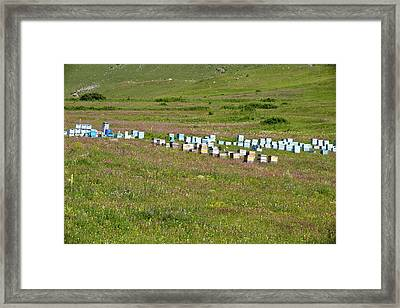 Bee Hives In Grassland Framed Print