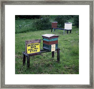 Bee Hives Framed Print by Robert Brook