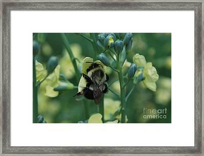Bee Hugs Framed Print