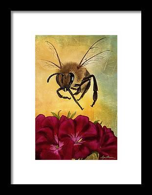 Honey Framed Prints