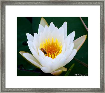 Framed Print featuring the photograph Bee In A Lily  by Marty Gayler