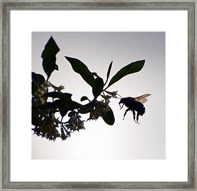 Framed Print featuring the photograph Bee In Flight  by Kerri Farley