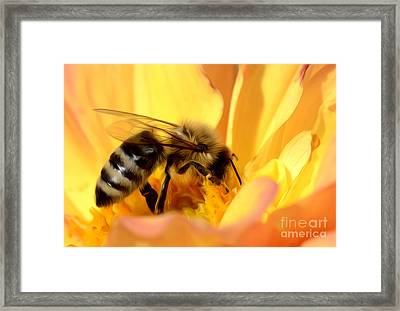 Bee In Flower Framed Print