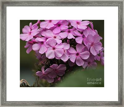 Bee In The Bouquet Framed Print