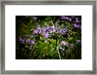 Bee Framed Print by Joel Loftus