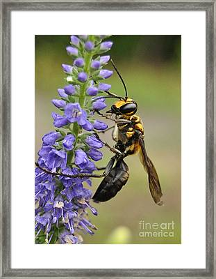 Bee Kind Framed Print by Kathy Baccari