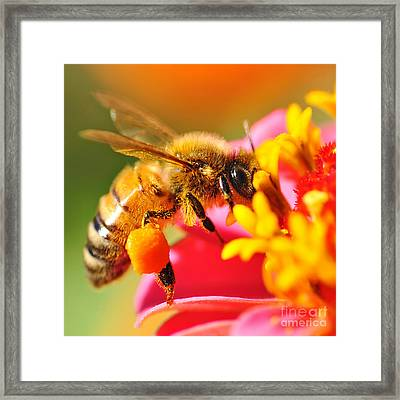 Bee Laden With Pollen 2 By Kaye Menner Framed Print